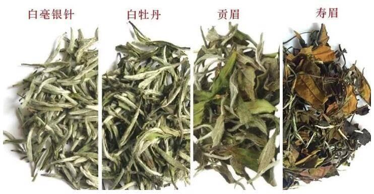 福鼎白茶种类白毫银针、白牡丹、寿眉